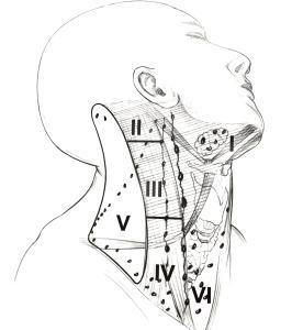 Linfonodi del collo, UICC, classificazione linfonodi del collo, stazioni linfonodali del collo ESCAPE='HTML'